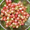 Cherries 8 by Jeelan Clark