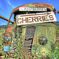 Cherries by Darrel Giesbrecht