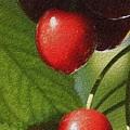 Cherries by Gloria Pasko