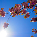 Cherries In The Sky by Patrick Byrnes