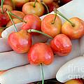 Cherries by Inga Spence