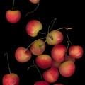 Cherries Multiplied by Heather Kirk