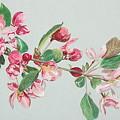 Cherry Blossom by Glenda Zuckerman
