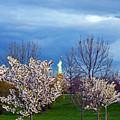 Cherry Blossom Liberatum by PatriZio M Busnel