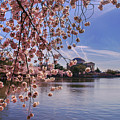 Cherry Blossom Over Tidal Basin by Rima Biswas