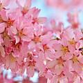 Cherry Blossom Pastel by Regina Geoghan