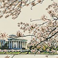 Cherry Blossom Tidalbasin View by Alice Gipson