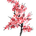Cherry Blossom Watercolor Poster by Joanna Szmerdt