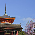 Cherry Blossoms And Kiyomizu-dera by Brian Kamprath