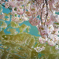 Cherry Blossoms Close Up Six by Susan Isakson