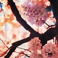 Cherry Blossoms In Washington D.c. by Cheryl Kurman