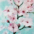 Cherry Blossoms by Jacqueline Whitcomb