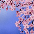Cherry Blossoms  by Jessica E Hayes