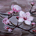 Cherry Blossoms by Maria Langgle
