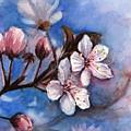 Cherry Blossoms  by Olga Shvartsur