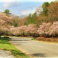 Cherry Blossoms Promanade by Ola Allen