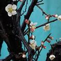 Cherry Branch by Elyse Fehrenbach