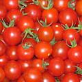 Cherry Tomato Harvest by M E Cieplinski