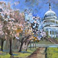 Cherry Tree Blossoms In Washington Dc by Donna Tuten