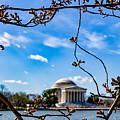 Cherry Tree Buds by Carol Ward