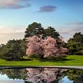 Cherry Tree Reflections by Jessica Jenney
