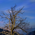 Centenary Chestnut At Blue Hour by Guido Montanes Castillo