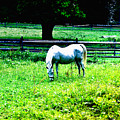 Chestnut Hill Horse by Bill Cannon