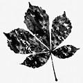 Chestnut Leaf by Erzebet S