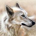Cheyenne by Sandi Baker