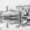 Chicago Botanic Garden Black And White by Julie Palencia