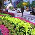 Chicago Color by Douglas Barnard