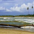 Chichirivihe Bay by Galeria Trompiz
