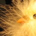 Chick by Susie DeZarn