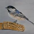 Chickadee Bird by Maria Woithofer