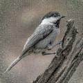 Chickadee by Carol Fox Henrichs