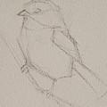 Chickadee Drawing by Jani Freimann