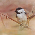 Chickadee In Spring by Susan Capuano