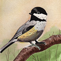 Chickadee by John Fredericks