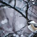 Chickadee Rain by Joann Long