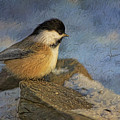 Chickadee Winter Perch by Deborah Benoit