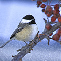 Chickadee With Craquelure by Deborah Benoit