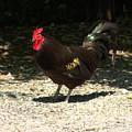 Chicken 2 by John Feiser