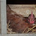 Chicken Box by Troy Stapek