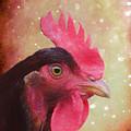 Chicken Portrait - Painting by Ericamaxine Price