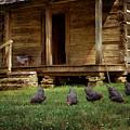 Chickens - Log House - Farm by Nikolyn McDonald