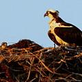 Chick's Crib by Sean Allen