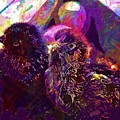 Chicks Hatched Fluffy Young Animal  by PixBreak Art