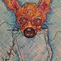 Chihuahua In A Pocket by Geraldine Myszenski