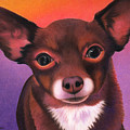 Chihuahua - Johnny by Annie Nelson