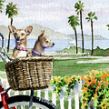 Chihuahuas In A Bike Basket by David Rogers